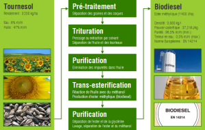 Cycle de production de Biodiesel à partir de Tournesols