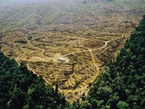 Deforestation amazonienne