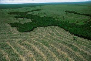La déforestation au Brésil