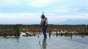 La culture d'algues en Indonésie