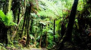 La forêt, le poumon terrestre