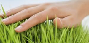 Les nettoyants écologiques pour mieux respecter l'environnement