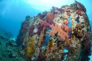 Objectif : obtenir des récifs naturels après plusieurs années