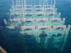 Les récifs artificiels