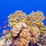 Récifs coralliens développement durable