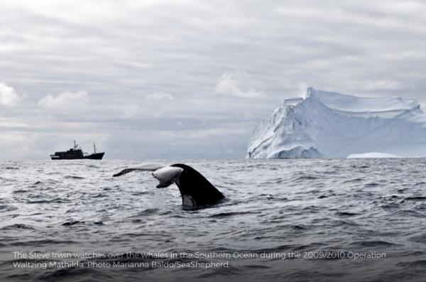Campagne victorieuse en antarctique en 2015 2016