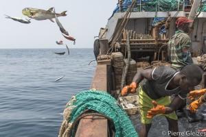 Campagne de l'Esperanza, navire de l'ONG, Greenpeace contre la surpeche industrielle en Guinee Conakry