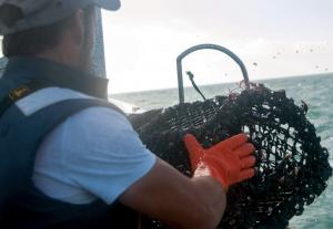 les pêcheurs de homard de Cotentin