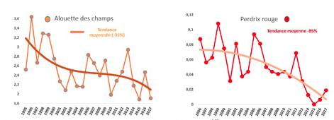 étude CNRS sur la disparition des oiseaux en france