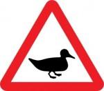 les oiseaux en danger