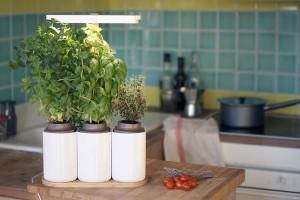 disposez des plantes aromatiques  dans la cuisine commune