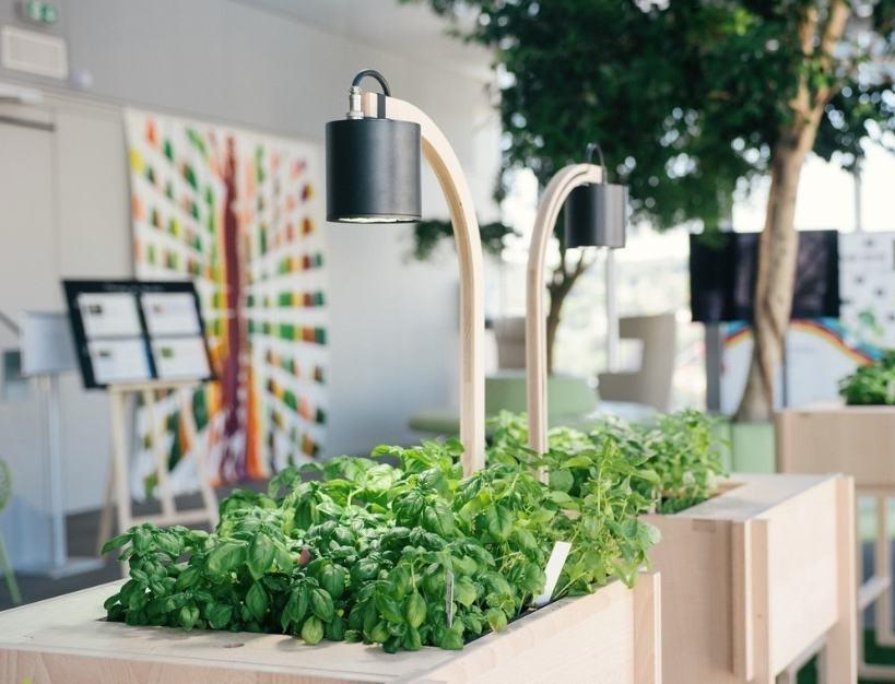 Voici un exemple de potager carré, petit, design qui s'intègre parfaitement dans un open space en entreprise