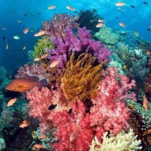 récifs marins