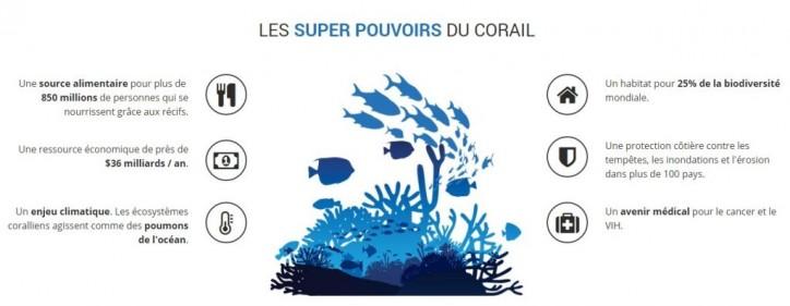 23000 coraux ont déjà été transplantés grâce à Coral Guradian